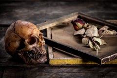 Stilleven met menselijke schedel en rozen droog in een omlijsting Stock Foto