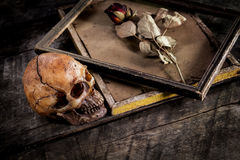 Stilleven met menselijke schedel en rozen droog in een omlijsting Royalty-vrije Stock Fotografie