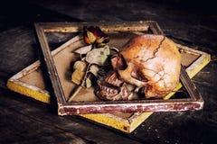 Stilleven met menselijke schedel en rozen droog in een omlijsting o Stock Afbeelding