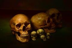 Stilleven met schedel, selectieve nadruk Royalty-vrije Stock Afbeeldingen