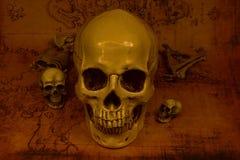 Stilleven met schedel, selectieve nadruk Stock Foto's