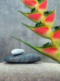 Stilleven met tropische bloem Stock Afbeeldingen
