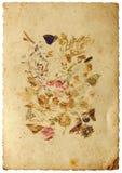 Stilleven met vlinder Stock Fotografie