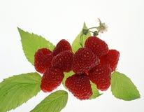 Stilleven met vruchten stock foto's