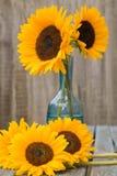 Stilleven met zonnebloemen Stock Fotografie
