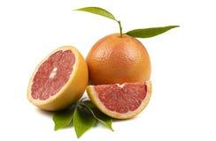 Stilleven van citrusvrucht Royalty-vrije Stock Foto's