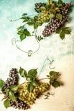 Stilleven van diverse types van druiven Stock Fotografie