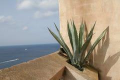 Stilleven van een aloë Vera met het overzees op de achtergrond in Bonifacio, Corsica Stock Afbeeldingen