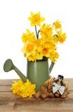 Het stilleven van de gele narcis royalty-vrije stock foto's