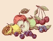 Stilleven van het diverse getrokken fruit Alle geïsoleerde voorwerpen Royalty-vrije Stock Foto's