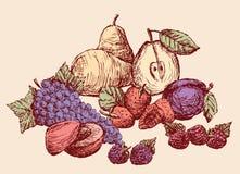 Stilleven van het getrokken fruit Alle geïsoleerde voorwerpen Royalty-vrije Stock Foto's