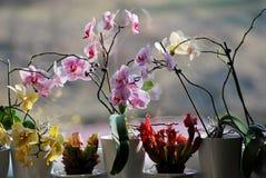 Stilleven van orchideeën stock afbeelding