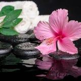 Stilleven van roze hibiscusbloem, groen blad shefler met daling Stock Afbeeldingen