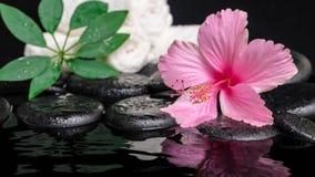Stilleven van roze hibiscusbloem, groen blad shefler met daling Royalty-vrije Stock Afbeelding