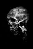Stilleven van schedel Royalty-vrije Stock Afbeeldingen
