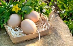 Stilleven van verse kippeneieren en de lentebloemen op een tablecl Stock Afbeelding