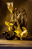 Stilleven vernietigde bloemen in bruine tonen Stock Afbeelding