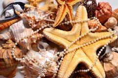 Stilleven, zeeschelpen stock fotografie