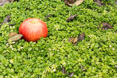 Stillevenappel op een achtergrond van groen gras stock foto's