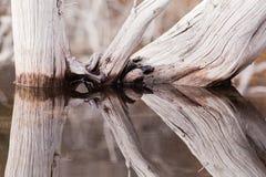 stillhet avspeglade gammala surface trees water ridit ut Royaltyfri Fotografi