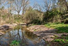 Stillheten av en flod mellan vegetationen Arkivfoto