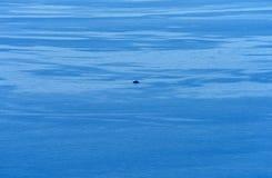 Stillheten, klart hav Royaltyfria Bilder