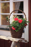 Stillife. Flowers on a bench in front of a window Royalty Free Stock Image