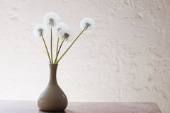 Free Stillife With Dandelions Stock Images - 47885124