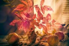 Stillleben-Apfelzweige Blumenstrauß des Fall-Herbstes herbstliche Lizenzfreies Stockfoto
