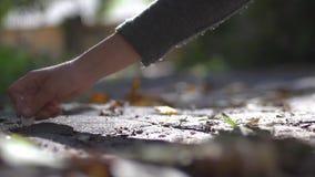 Stillleben, Bild, Reflexion stock video footage