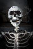 Stillleben, das menschliches Skelett mit Zigarette raucht Stockfotos