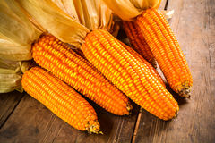 Stillleben des getrockneten Mais lizenzfreie stockbilder