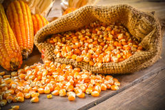 Stillleben des Maissaatguts und des getrockneten Mais lizenzfreie stockbilder