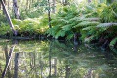 Stillleben des Wassers und des Waldes in Dänemark lizenzfreie stockfotos