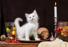 Stillleben des weißen Kätzchens sitzend in einer Lehmplatte auf dunklem backg lizenzfreie stockbilder