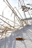 Stillleben im Schnee Lizenzfreies Stockfoto