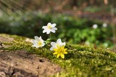 Stillleben im Wald Lizenzfreie Stockfotos