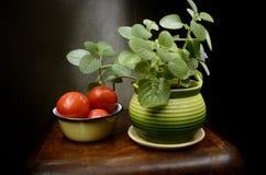 Stillleben mit Basilikum und Tomaten Stockfotos
