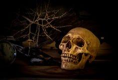 Stillleben mit dem Schädel auf hölzernem und trockenem Niederlassungshintergrund Lizenzfreie Stockfotografie