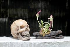 Stillleben mit dem Schädel und Orchidee auf Holz in der Nachtzeit mit dak Hintergrund Stockfoto