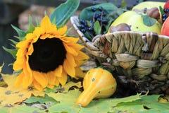 Stillleben mit den Kürbisen und den Sonnenblumen Lizenzfreies Stockfoto