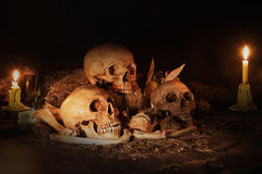 Stillleben mit drei Schädeln, trockener Frucht und Heu Stockbild