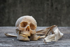 Stillleben mit einem menschlichen Schädel stockbild
