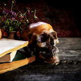 Stillleben mit einem Schädel und einem Buch auf hölzernem stockfotografie