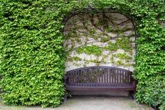 Stillleben mit einer Holzbank und einer Wand des Efeus Stockbild