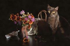 Stillleben mit einer Katze Lizenzfreie Stockfotos
