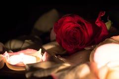 Stillleben mit einer Rose Lizenzfreies Stockfoto