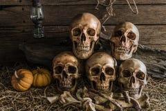 Stillleben mit fünf menschlichen Schädeln in der Scheune Stockbild