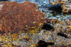Stillleben mit gelbem Honigkammrahmen auf schwarzem Hintergrund stockbild