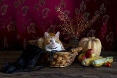 Stillleben mit Kürbis und Katze auf hölzernem Hintergrund stockfoto
